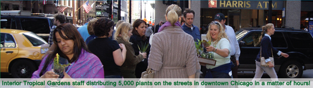 Interior Tropical Gardens staff distributing 5,000 plants on the streets in downtown Chicago in a matter of hours!