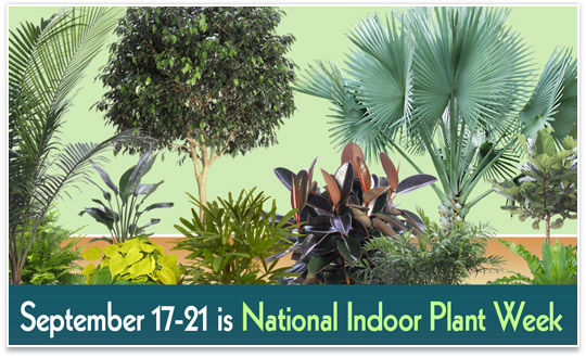 National Indoor Plant Week Sept 17-21 2018